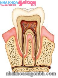 Điều trị tủy răng – bảo tồn răng thật
