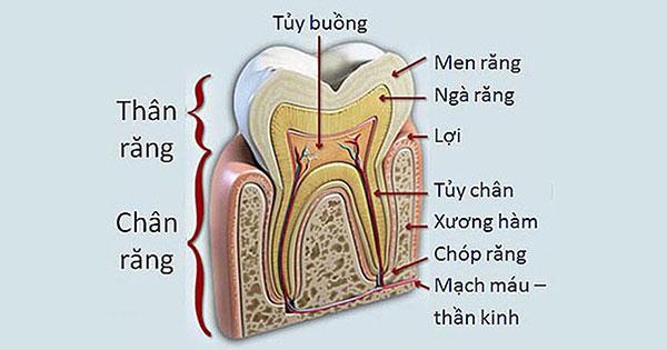 Nguyên nhân và biến chứng của bệnh viêm tủy răng